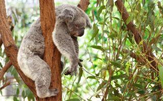 7 животных, которые не страдают от сна